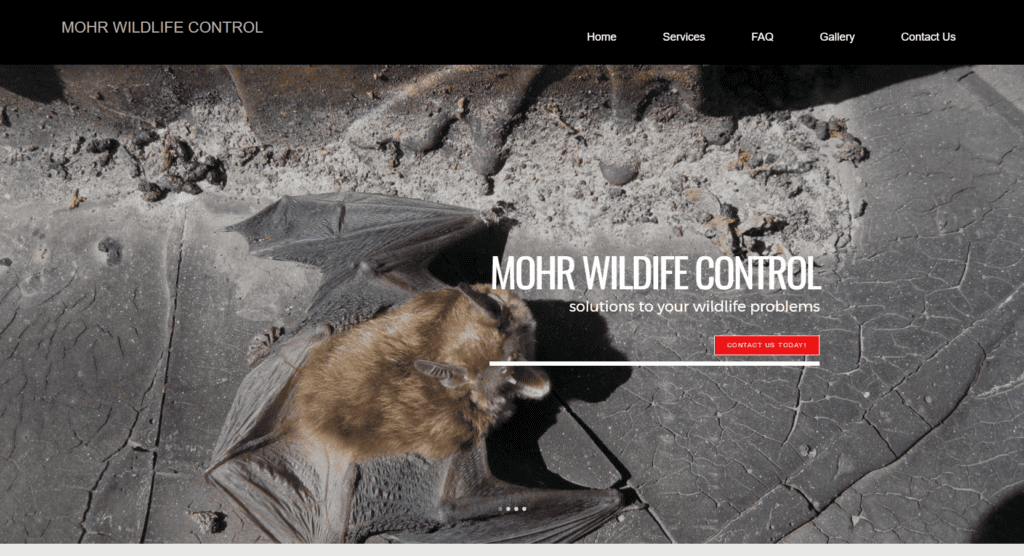 Mohr Wildlife Control